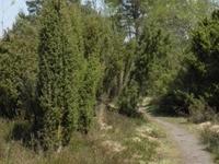 Natuurreservaat 'Het Heiderbos': Het Heiderbos is een natuurreservaat met jeneve